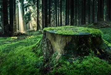 Entreprise de dessouchage d'arbres près de Lyon